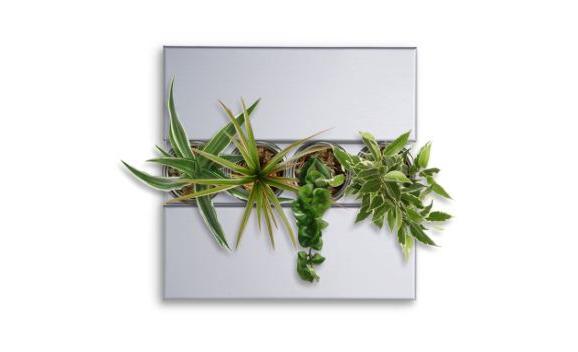 plantes murales flowerbox. Black Bedroom Furniture Sets. Home Design Ideas
